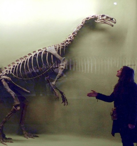 Natural History Museum of BostonDino never gave back the handshake. Polite guidelines were not commun back in his time.