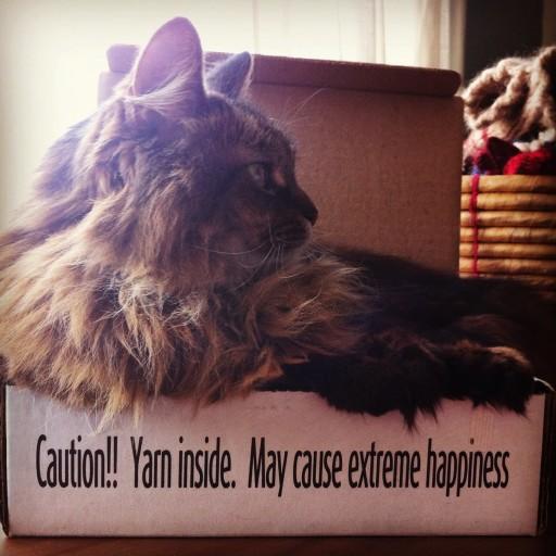 J'aime la laine et Zazie aime la boîte!